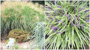 ornamental grasses a guide to landscape design maintenance