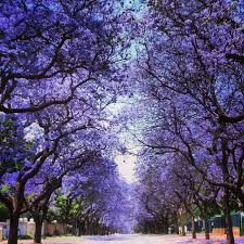 32 best 29 of the world s most beautiful tree lined streets