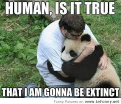 Funny Panda Memes - sweet little panda