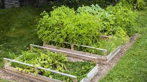 Backyard Trees Landscaping Ideas by Edible Landscaping Ideas Fruit U0026 Vegetable Plants For Your Yard