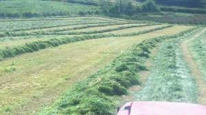 silage rowing with single rotor rake youtube