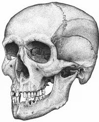 Halloween Skull Drawings Skeleton Head Drawing Draw A Skull Halloween Special Youtube