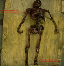 realistic rotting skeleton decaying corpse halloween prop life size