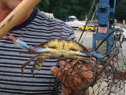 outdoors catch some crabs on the bay news the bulletin