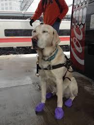 guide dog harness uveitis u2013 blindsommelier