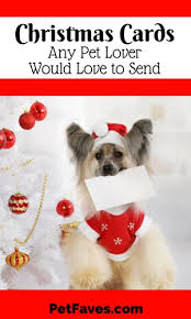 cards any pet lover would to send