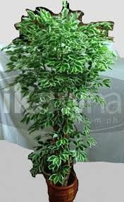 artificial trees and plants for sale ikaw na buy and sell