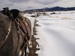 Montana How Far Can A Horse Travel In A Day images Man and horse travel across the united states equitrekking jpg