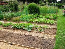 Vegetable Beds Using Tanalised Timber For Raised Vegetable Beds Tikorangi The