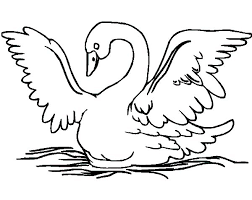 swans spread wings coloring pages batch coloring