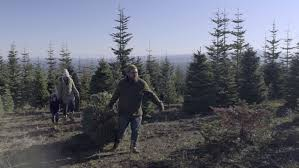 father carries christmas tree mother and son follow behind at u