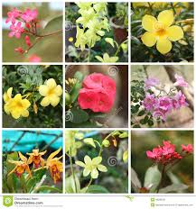tropical plants and flowers stock photo image 48398356