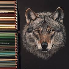 prismacolor amazon black friday wolf drawing made with prismacolor pencils on black paper sold