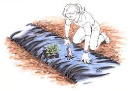 planting a vegetable garden mulch planting a vegetable garden
