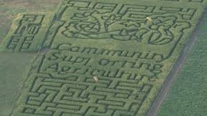 Denver Botanic Gardens Corn Maze Chatfield Corn Maze Shows Support For Local Growers Cbs Denver