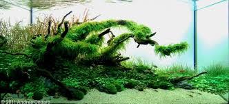 Aquascape Tree Planted Tank The Shelter By Andrea Ongaro Aquarium Design