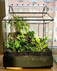 diy moss terrarium kit u2013 mountainmoss