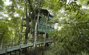 world u0027s coolest tree house hotels travel leisure