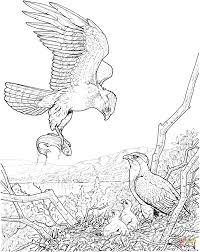 eagle catch a fish for its baby coloring page free printable