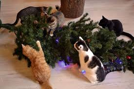 cat christmas 15 cats helping decorate christmas trees bored panda