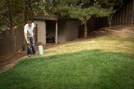 lawn paint keeps grass green lawn spraying lawn maintenance tips