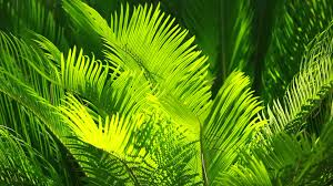 green and bright palm leaves on blured background video 12103190