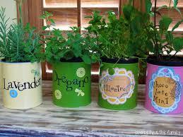 how to grow an indoor kitchen herb garden 5 ways to grow an herb