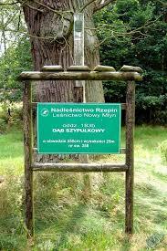 pomniki przyrody gajec pl