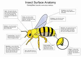 Surface Anatomy Eye C 1 Inquiry Lessons Tes Teach