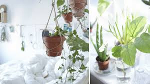 plante verte dans une chambre plante verte dans une chambre sant les plantes d polluent et
