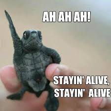 Funny Turtle Memes - 20 turtle memes that ll make your day better sayingimages com