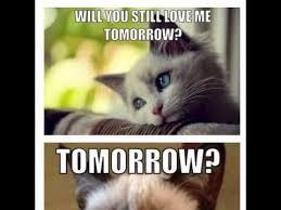 Best Grumpy Cat Memes - top 13 grumpy cat memes youtube