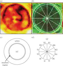 Maps C Quantitative Analysis Of Three Dimensional Fibrillar Collagen