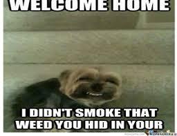 High Dog Meme - high dog by recyclebin meme center