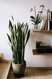 live indoor plants indoor home plants fresh in custom best 25 house ideas on pinterest