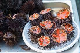 comment cuisiner des oursins huîtres et oursins iodées régal
