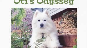 american eskimo dog cost in india oti u0027s odyssey a rescue dog u0027s