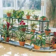 indoors garden indoor gardening gardening indoors houseplants growing houseplants