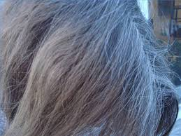 photos of gray hair with lowlights growing out gray hair leaftv