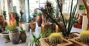 california plantscapes interior landscape design irvine ca