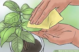 how to water indoor plants 13 steps with pictures wikihow