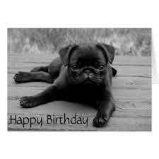 pug birthday greeting cards zazzle co uk