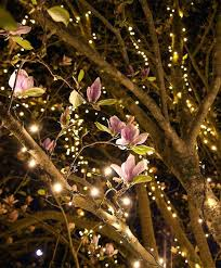 outdoor tree lights for summer outdoor summer string lights magnolia tree branches wrapped with