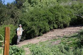 california native plant society plants of the san marcos foothills preserve