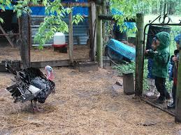 ecofarm2015 turkey weaver street market