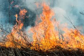 Wildfire Test Questions by Seed Certifying Agencies Assist After Wildfires Seedworld