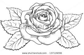 rose tattoo vector download free vector art stock graphics u0026 images