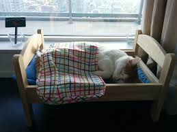 bought my cat a bed in ikea imgur