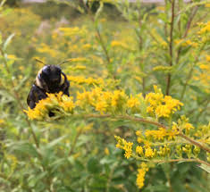 milton u0027s billion backyard bee project home facebook