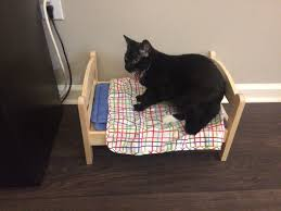 we got our cat a bed from ikea album on imgur